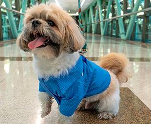 Traga seu pet para passear com você no Plaza!